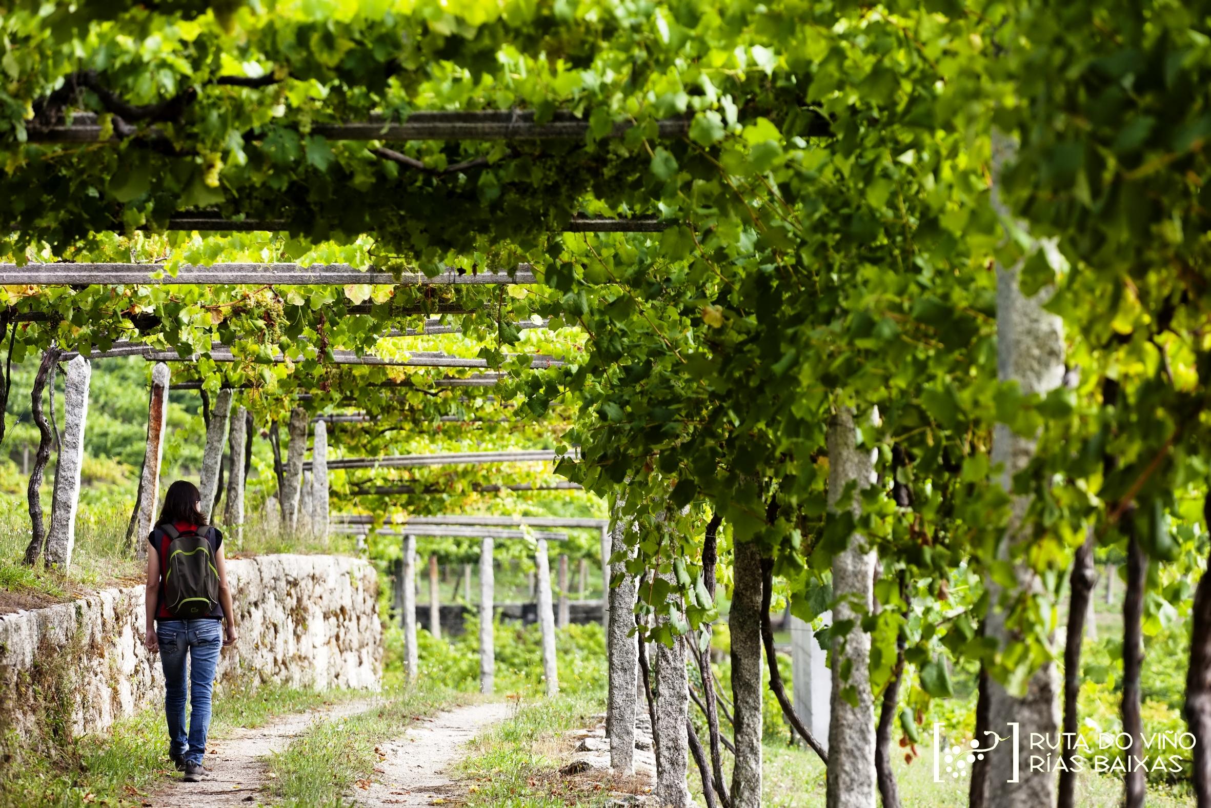 Rías Baixas se sitúa a la cabeza de las Rutas del Vino de España en gestión y planificación
